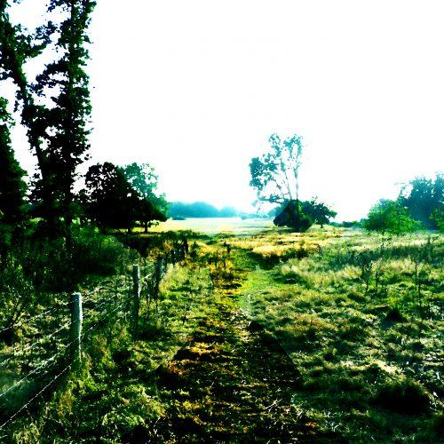phoenix field