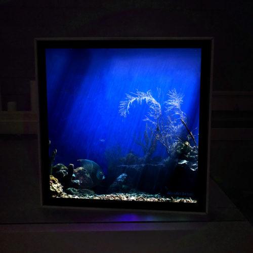 GA - Aquarium 60